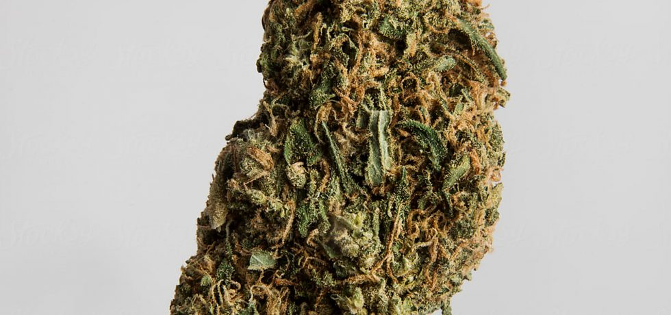 new cannabinoids discovered